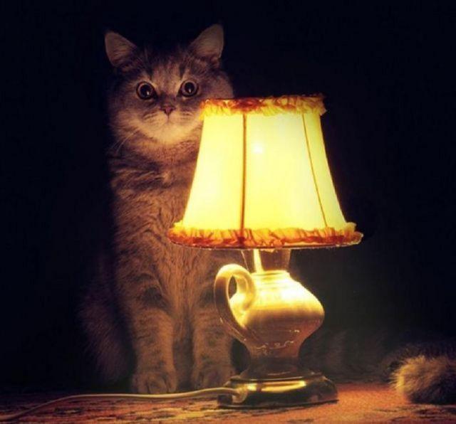 3c4b3ec9f9e9 Вот есть к примеру кошка, зовут Чучундра, в просторечьи Чуча. Подобрана на  помойке возле пенсионного фонда в младенческом возрасте.